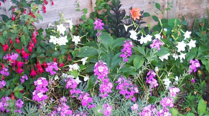 A Gardener's Delight