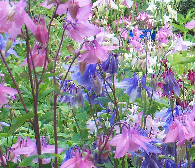 Kit Domino's Garden